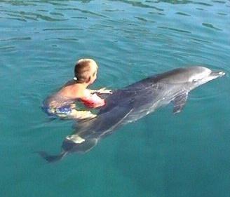дельфинотерапия - лечение детей и взрослых